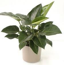 Low Light Indoor Flowers 337 Best Posh Plants Images On Pinterest Gardening Indoor