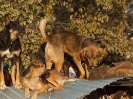comment empecher chien de monter sur le canapé 12 règles pour montrer à chien qui est le maître réussir