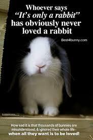 235 best house rabbit care images on pinterest house rabbit pet