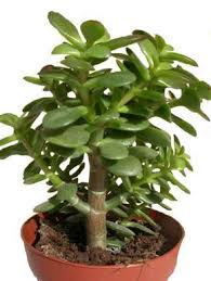 plante d駱olluante bureau 566 best plantes d intérieur images on house plants