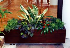 indoor container gardening gardening ideas