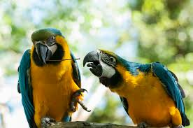 fota wildlife park cork ireland backyard galah cam
