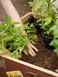 Herb Container Garden - how to plant an herb container garden hgtv