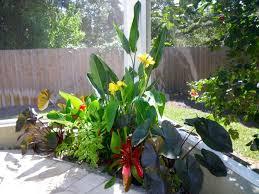 Tropical Backyard Ideas Tropical Backyard Landscaping Ideas Home Decor Cheap Landscaping