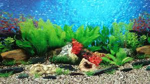 halloween fish tank background amazon com 9085 12