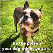 Boston Terrier Meme - be the person your dog thinks you are a boston terrier philosophy