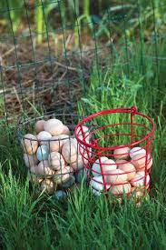 a plan for food self sufficiency modern homesteading mother