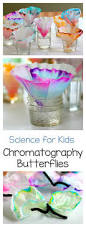 science for kids chromatography butterfly craft steam