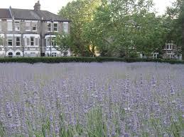 Image Flower Garden by Hidden Gardens And Green Spaces In London U2013 Secret Gardens U2013 Time