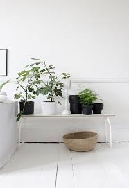 White Bedroom Plants 1806 Best Herb Plant Green Images On Pinterest Plants At Home