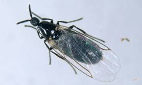 Tiny Flying Insects In House by Top 10 Fastest Insect Wings On Earth