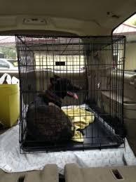 belgian malinois rescue va zucca u2013 boynton beach fl to leesburg va u2013 1034 miles abmr
