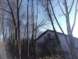 landschaftsbau m nchen gehölzschnitt und baumfällung münchen m d garten und
