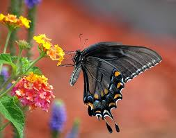 what does it when you see a butterfly flying spiritual meaning