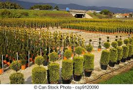 stock photography of view ornamental nurseries view of