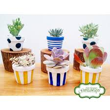 wedding souvenirs succulents in clay pots wedding souvenirs and party favors go