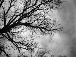 black and white images of trees 28 free hd wallpaper earth