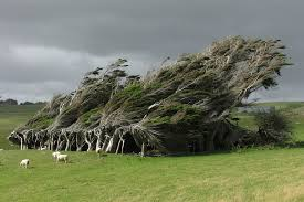 cool trees 16 of the most magnificent trees in the world bored panda