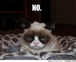 Meme Generator Grumpy Cat - grumpy cat pictures with captions no grumpy cat meme