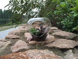 glass succulent garden planter terrarium big apple shape glass