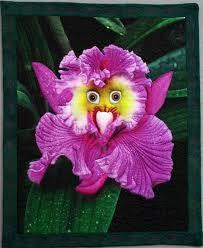 Monkey Orchid 30 Best Monkey Orchids Images On Pinterest Orchid Flowers