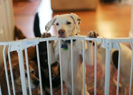 deaf puppy from goochland on animal planet u0027s u0027puppy bowl