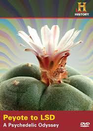 Seeking Cactus Imdb Lophophora Peyote Information On The Peyote Cactus Et Cetera