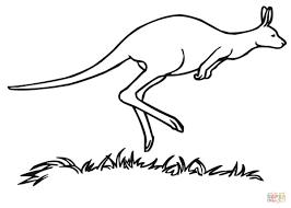 coloriage marsupial kangourou coloriages à imprimer gratuits