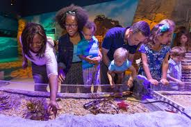 concord mills thanksgiving hours tickets to sea life charlotte concord buy online u0026 save