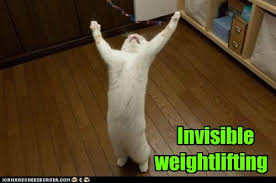 Invisible Cat Memes - lolcats weightlifting lol at funny cat memes funny cat
