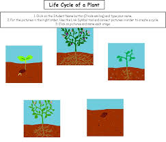 life cycle of a plant plant life cycle worksheet reviews and
