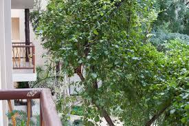 Modern Deco Prana Tulum Condo Details Amenities And Introduction