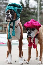 boxer dog funny 621 best boxers images on pinterest boxer love boxer puppies