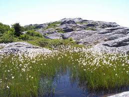 New Hampshire vegetaion images Monadnock vegetation monadnock mountain mount monadnock jpg