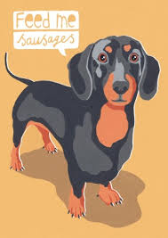 dachshund animal card scribbler cards