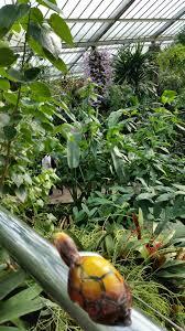 kew royal botanic gardens u2013 little turtle travels
