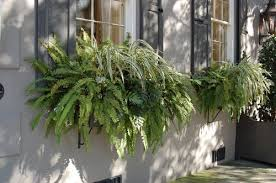 What To Plant In Window Flower Boxes - world is more beautiful with plants in window boxes www