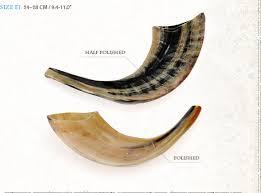 shofar from israel ram s horn shofars barsheshet ribak shofarot israel shofar makers