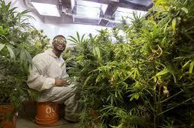 marijuana led colorado state running back to quit football