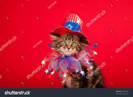 Maine Flag Image Cute Cat American Flag Hat On Stock Photo 95369446 Shutterstock