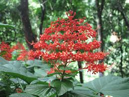 native plants fort myers 8 best tree images on pinterest tropical plants florida