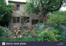 Patio Tree Roses by Patio Under Trees Outside An Old French Stone Farmhouse With A