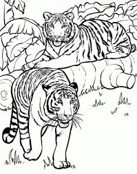 20 free printable lion coloring pages everfreecoloring com