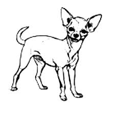 coloring pages chihuahua puppies chihuahua dog cute pet coloring pages netart
