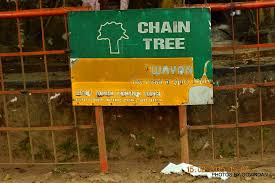 temple below chain tree picture of chain tree of karinthandan