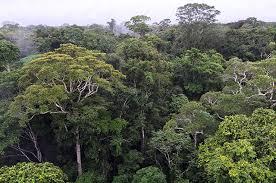 canopy amazon brazil opens vast amazon reserve for gold mining the gaza post