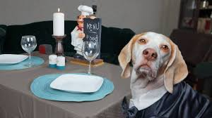 dogs at dinner table dog makes romantic dinner for two funny dogs maymo penny youtube