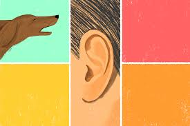 how to be mindful with a barking dog the new york times