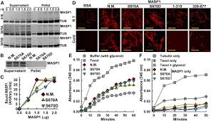 protein phosphatase 2cs and microtubule associated stress protein