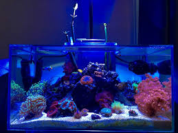Fluval Sea Marine And Reef Led Strip Lights by Fluval Edge Tank Thread Page 32 Aquarium Journals Nano Reef